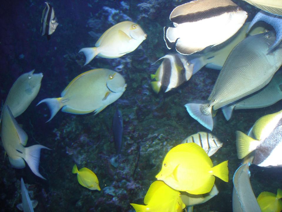Tropical fish hawaii for Tropic fish hawaii
